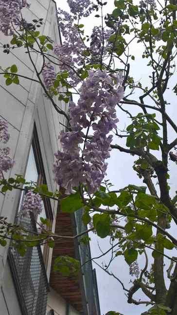 Bloemen aan de Anna Paulownaboom