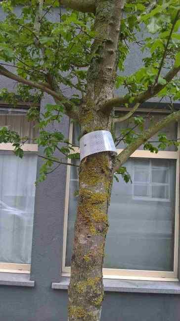 Net aangeplante boom