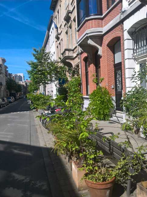 Plantenbakken op straat