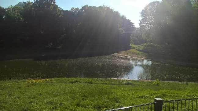 Water in de vijver van het Stadspark