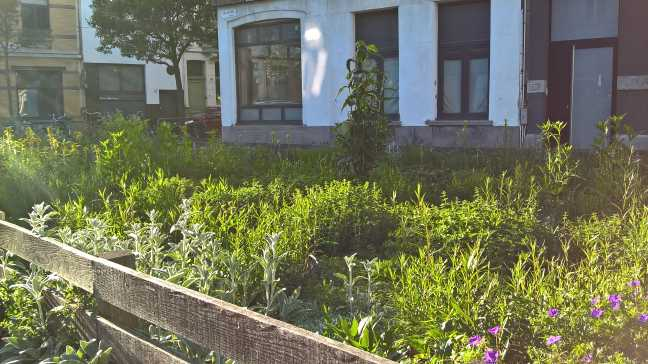 Wilde plantentuin
