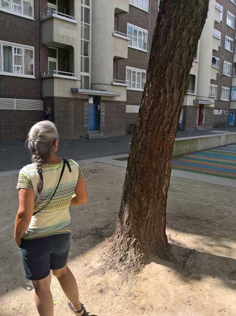 De Zwarte berk, een fascinerende boom